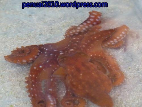Bintang Laut di pantai Kukup