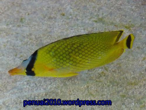 ikan di pantai Kukup